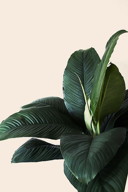 Living: 7 Plants to Grow Indoors