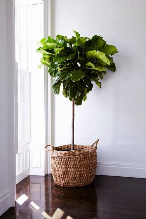 Living: 7 Plants to Grow Indoors | The New Naples