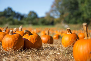 pumpkin patches in Naples, Bonita Springs, Fort Myers, Southwest Florida