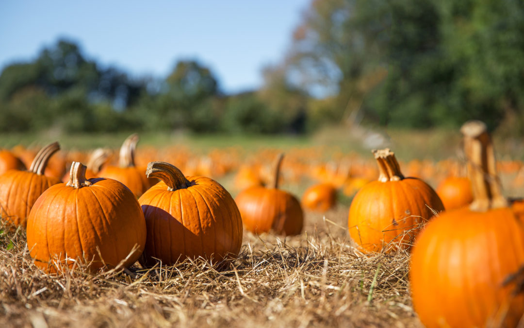 pumpkin patch in Naples, Bonita Springs, Fort Myers, Southwest Florida