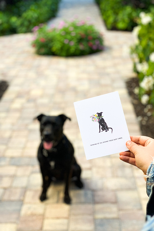 watercolor cards supporting Naples animal shelters